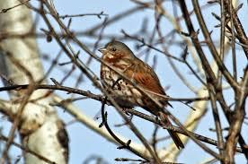 listbirds a beadiful mess