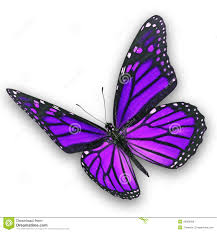 purple butterfly flying stock photo image of 46588366