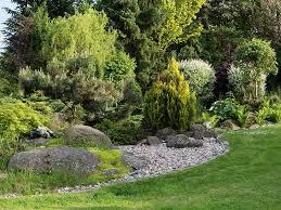 how to grow conifers saga