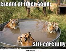 Tiger Meme - cream of tiger soup memey com