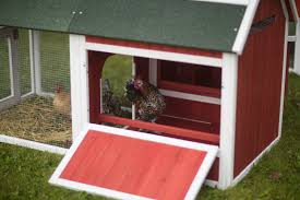 Small Backyard Chicken Coops by Prevue Hendryx Red Barn Small Chicken Coop U0026 Reviews Wayfair