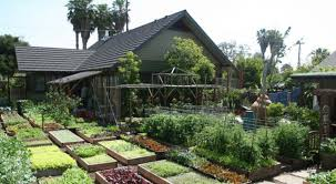 family gardening home gardening this family garden produces a serious amount of food