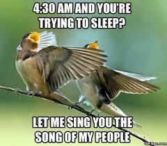 Funny Bird Memes - meme bird 28 images 30 most funniest bird meme images and photos
