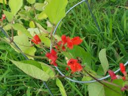 wisconsin native plants native plants u2013 greenwordchef u0027s blog