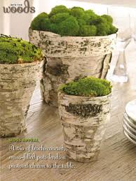diy birch pots with moss family circle photo by david prince