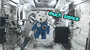 Doge Meme Youtube - doge love space doge meme youtube