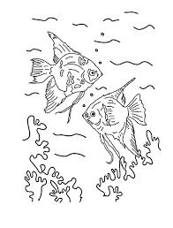 incredible angel fish coloring angel fish coloring