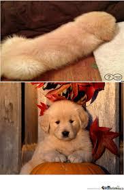 Weiner Dog Meme - weiner dog by recyclebin meme center