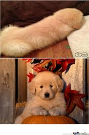 Orange Dog Meme - weiner dog by recyclebin meme center