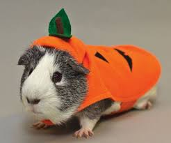 Funny Halloween Animal Costumes 25 Pig Costumes Ideas Baby Costumes
