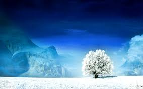 snow tree wallpaper 6942328