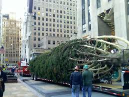 rockefeller center tree arrives cbs new york