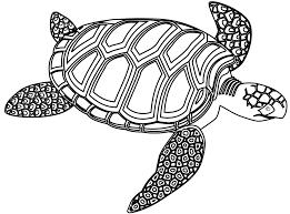 sea turtle clipart realistic pencil and in color sea turtle