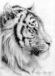 perfection tiger head drawing color me pinterest tigers