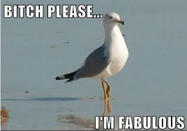 bitch please i m fabulous bitch i m fabulous know your meme