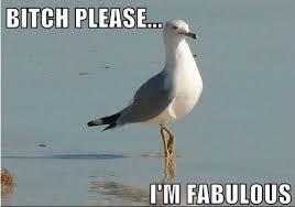 I Am Fabulous Meme - bitch please i m fabulous bitch i m fabulous know your meme
