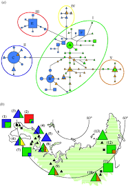 genetic analyses reveal independent domestication origins of