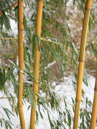 free images tree branch snow winter leaf flower produce
