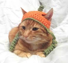 cat halloween picture crochet cat hat halloween pumpkin hat for cats cat halloween