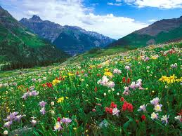 Beautiful Pictures Of Spring by Denver U0027s Finest Financial Firm