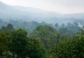 Plants In The Tropical Rain Forest - tropical rainforest u2014 kidcyber