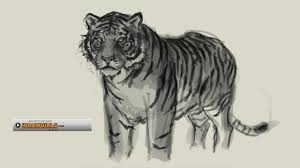 how to draw tiger youtube