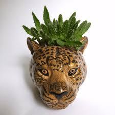 Beautiful House Plants by Beautiful House Plants Cacti U0026 Succulents In Stylish Pots