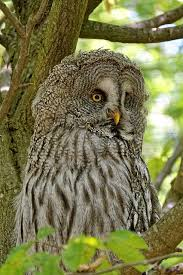 owl on tree domain free photos for 2336x3504 2 83mb