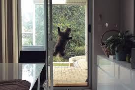 Cat Door For Interior Door by Diy Interior Cat Door 2 Photos U2013 1bestdoor Org