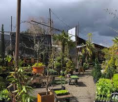 native plant nursery portland oregon about u2014 pomarius nursery plants with character