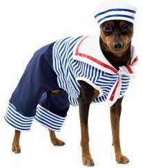 Funny Dog Costumes Halloween 109 Dog Cat Costumes Images Animals