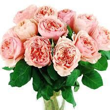 wholesale roses garden salmanazar bulk peachy pink garden roses from
