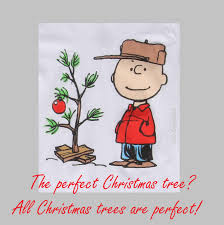 the perfect christmas tree all christmas trees are perfect
