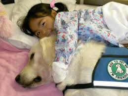 Comfort Pet Certification Therapy Dogs Therapy Dog Certification