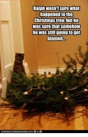 Cat Christmas Tree Meme - 25 best memes about christmas tree christmas tree memes