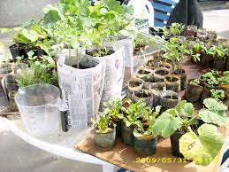 how to make organic planting pots using old newspapers 7 steps