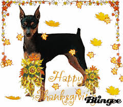 thanksgiving pins min pin thanksgiving greeting m is for minpins