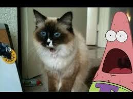 Surprised Patrick Memes - best of surprised patrick star gifs youtube