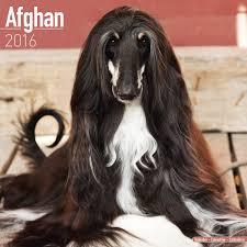 afghan hound fabric afghan dog calendar afghan hounds calendar breed specific