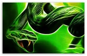 a green snake wallpapers dynamic desktop wallpaper page 2 of 3 hdwallpaper20 com