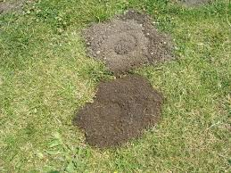 home designer pro layout holes in my yard with no mounds a fresh vs old gopher hole home