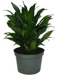 purifier l air d une chambre plante purificatrice d air pour votre chambre plantes