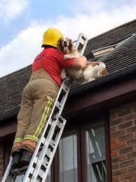 firefighters are called when neighbors spot a lonely springer