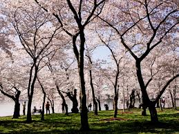 best spring trips 2012 national geographic