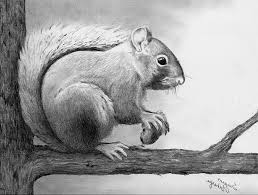 simple pencil drawings of animals pencil drawing of animals pencil
