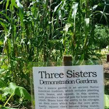 the three sisters garden u2013 teen leadership corps tlc at awbury