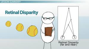 retinal disparity in psychology definition u0026 examples video