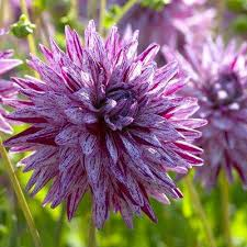 purple flower purple flower bulbs garden plants flowers the home depot