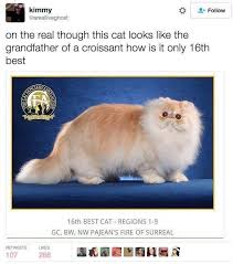 Silly Cat Memes - 19 hilarious cat memes that are total wins fail blog funny fails