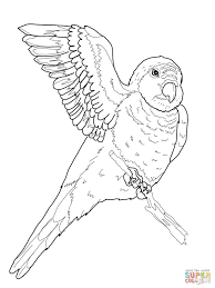 quaker parrots coloring free printable coloring pages